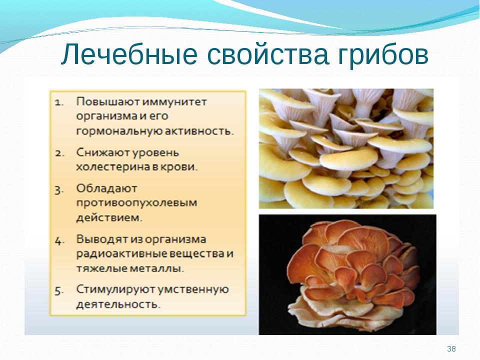 Гриб трутовик березовый