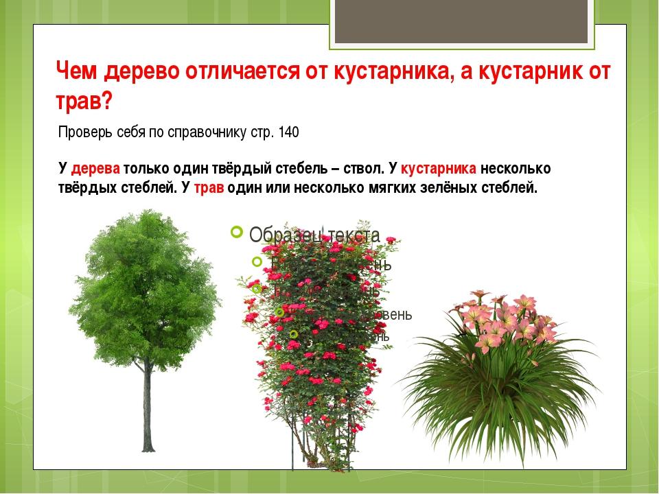 Красивые цветущие кустарники для сада