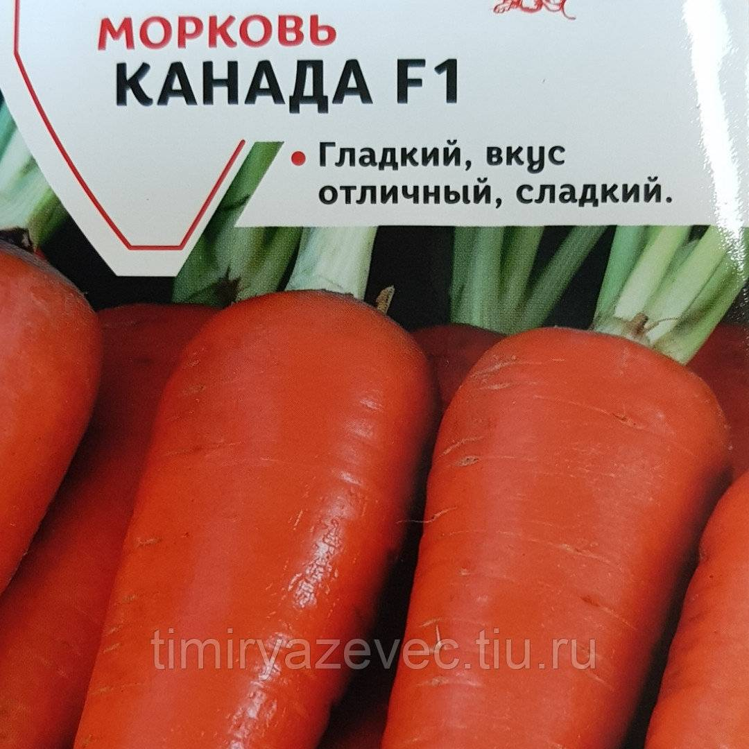Морковь канада f1: описание и характеристика сорта, фото + отзывы