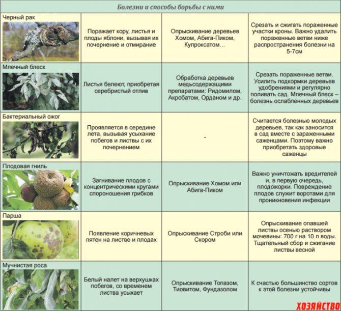 Сорта растений, устойчивые к болезням и вредителям