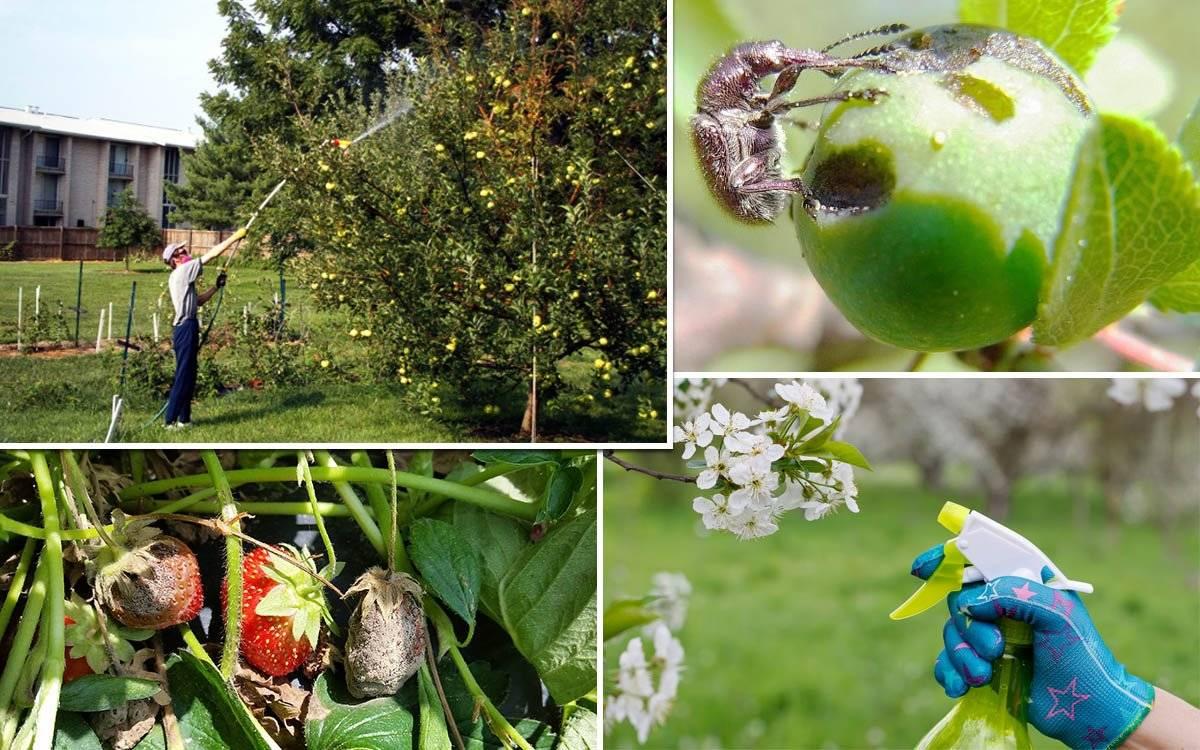 Что делать, если на яблоне листья покрываются паутиной, как бороться и чем обработать