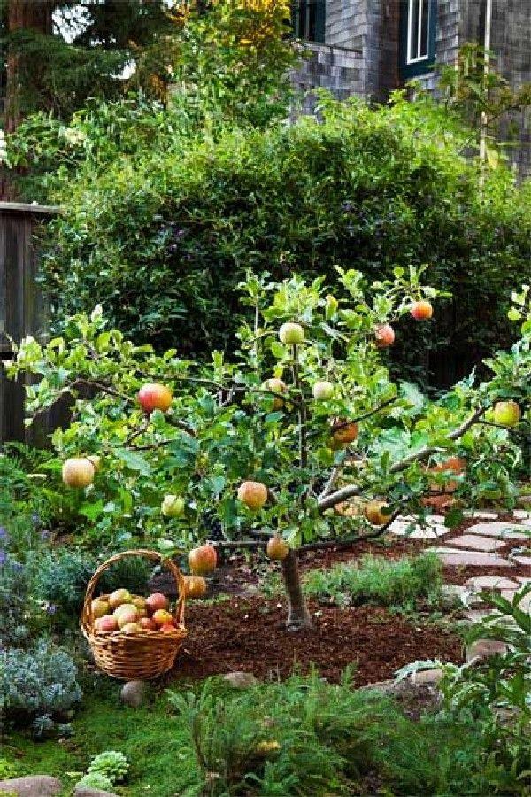 Карликовый сад на даче: преимущества и недостатки