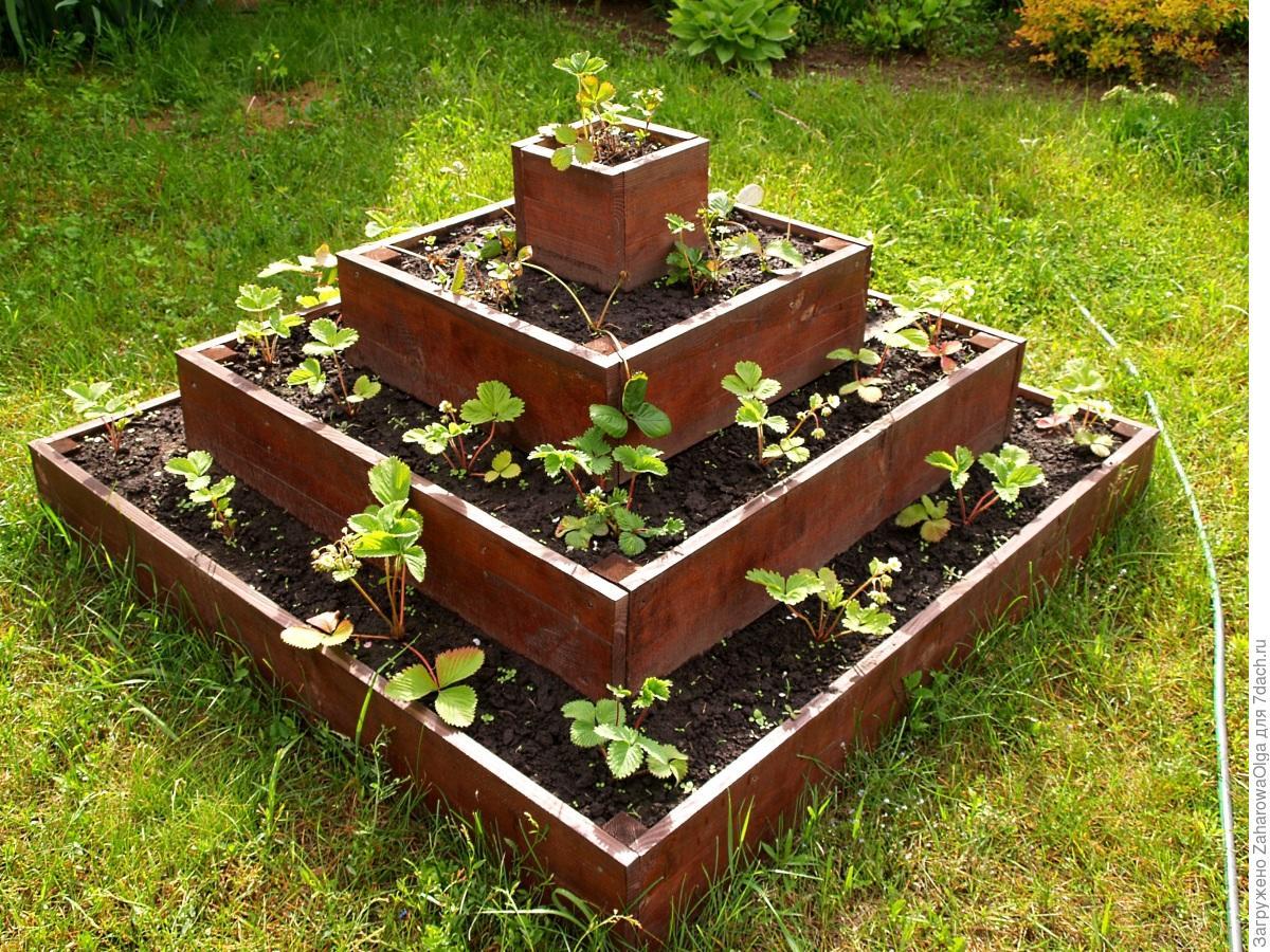 Пирамида для клубники: преимущества и недостатки многоярусной грядки