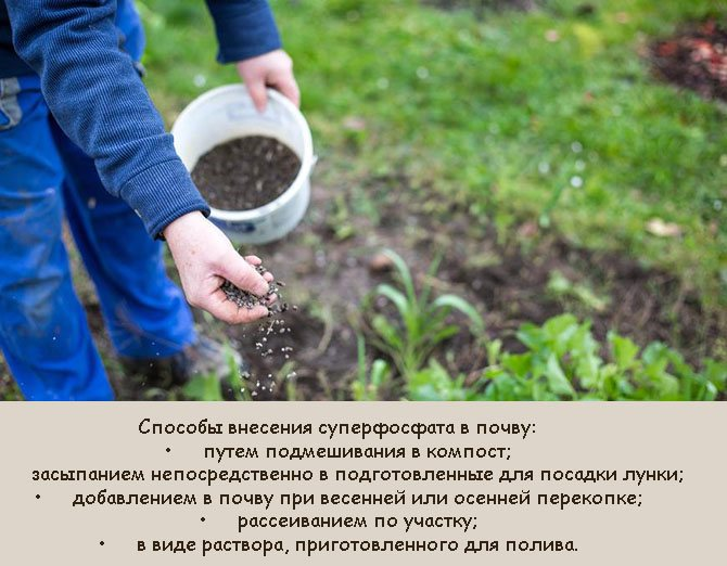 Грамотное удобрение голубики – гарантия высокого урожая