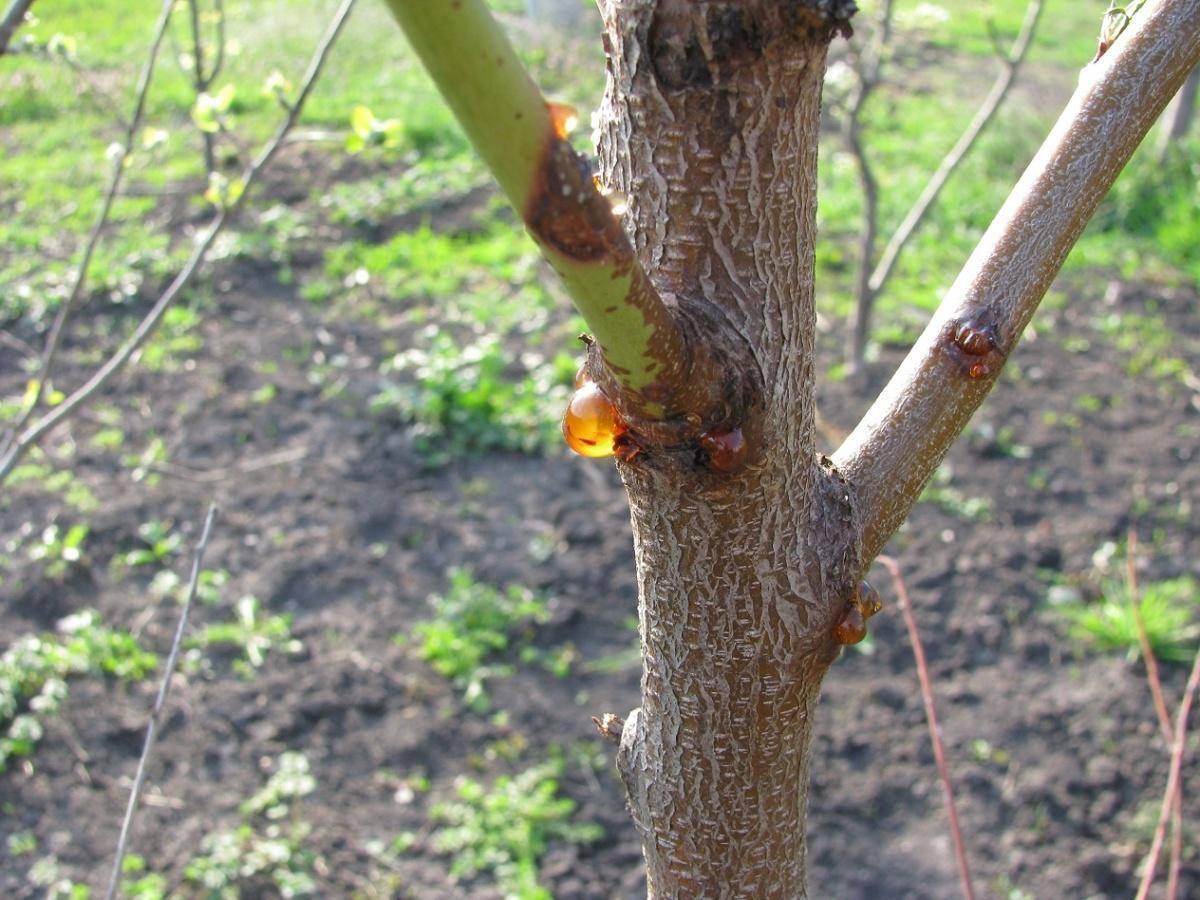 Народные средства для лечения печени   компетентно о здоровье на ilive