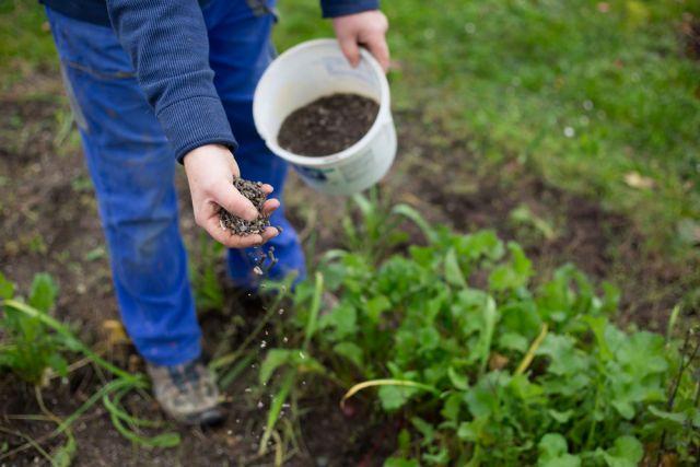 Как и чем подкормить сливу весной, летом и осенью для хорошего урожая: народные средства и препараты, сроки и схема удобрения