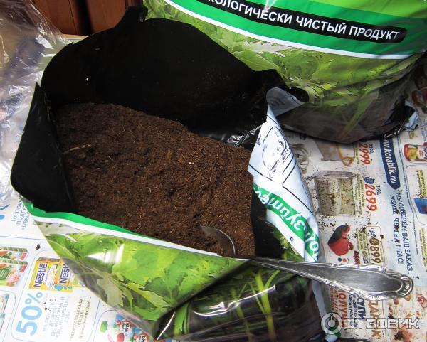 Подготовка почвы для рассады своими руками
