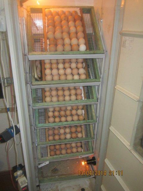 Как сделать своими руками инкубатор для куриных яиц в домашних условиях: схема и чертежи с размерами и видео