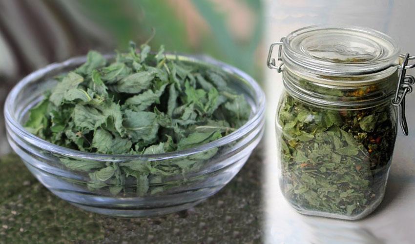 Когда сушить мелиссу и мяту: как правильно собирать и заготавливать растения на зиму, а также можно ли их замораживать, в том числе для приготовления чая? русский фермер