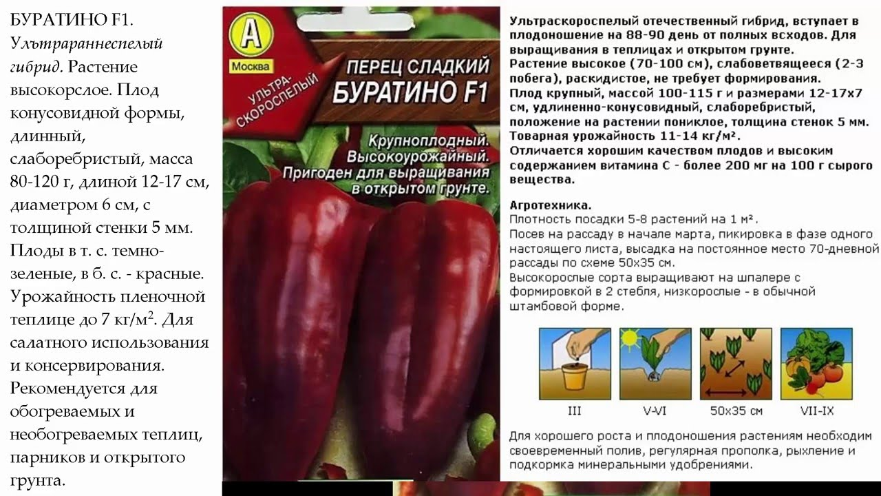 Перец какаду: описание сорта и характеристика, агротехника, видео и фото
