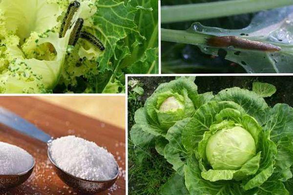 Пищевая сода для сада и огорода — способы применения на участке