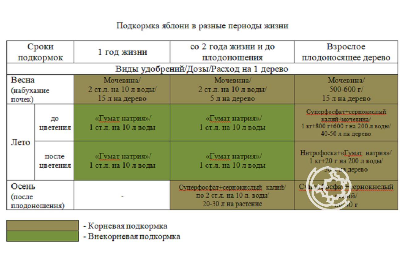Персик колоновидный описание сортов отзывы - скороспел