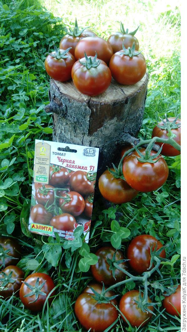 Сорта черных помидоров с фото и описанием