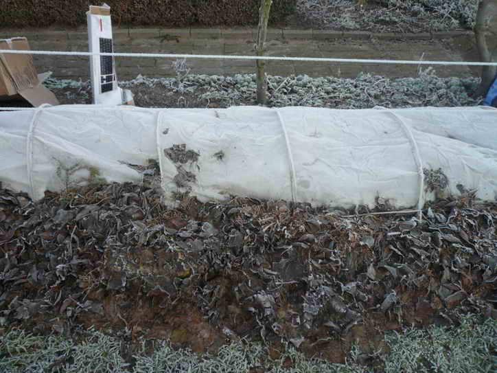 Когда укрывать виноград на зиму, сроки и способы укрытия