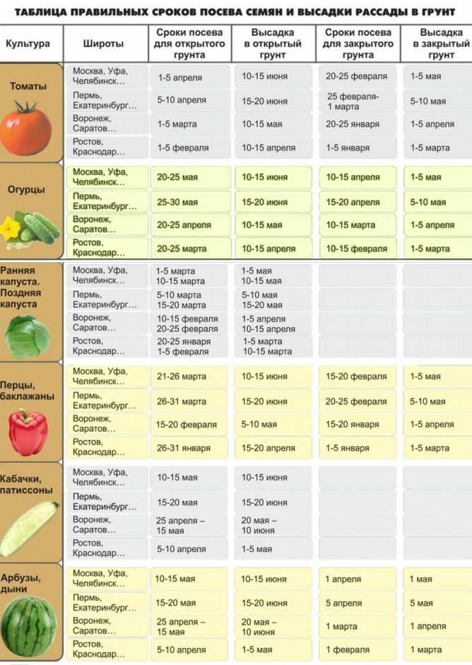 Когда сажать помидоры на рассаду в 2021 году в сибири: таблица благоприятных дней по лунным фазам и особенности климата региона