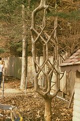Арбоскульптуры или как живые деревья превратить в предметы искусства – дачные дела