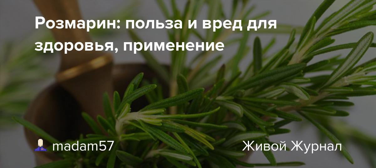 Польза, лечебные свойства и противопоказания к употреблению розмарина | kazandoctor.ru