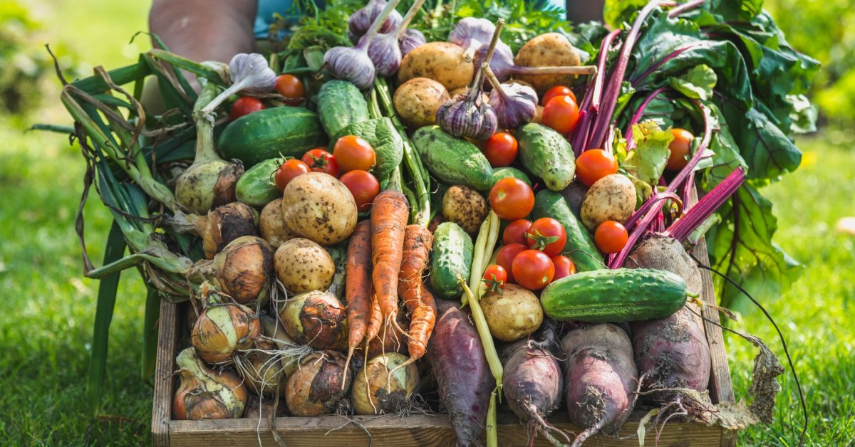 Когда пора выкапывать морковь и убирать ее на хранение: сроки и правила уборки
