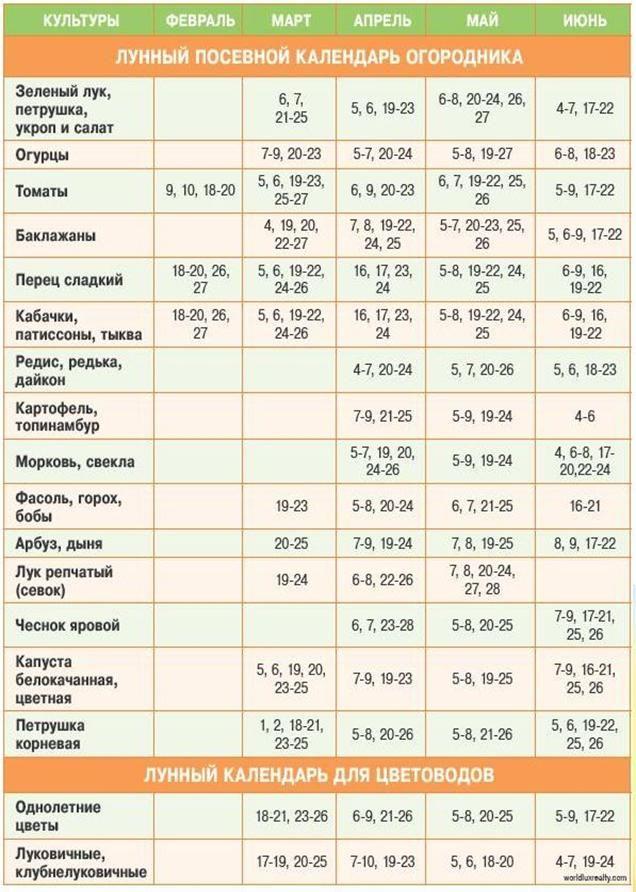 Календарь посева семян на рассаду в 2021 году: расчет благоприятных дней для посадок, пересадок и ухода за насаждениями по лунным фазам