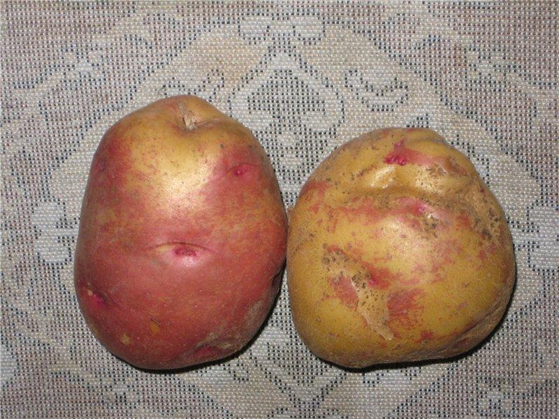 Картофель иван-да-марья: описание популярнейшего в народе сорта - огород, сад, балкон - медиаплатформа миртесен