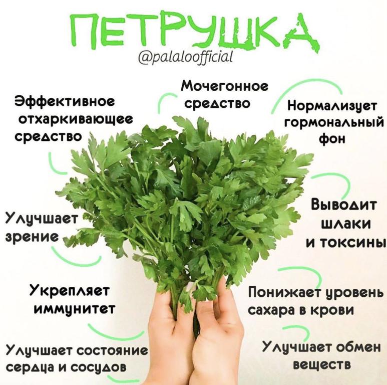 Польза базилика для мужчин: какими свойствами обладает растение, может ли нанести вред, что нужно учитывать при приеме, каковы противопоказания для употребления? русский фермер