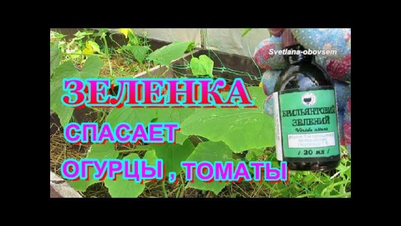 Обработка огурцов молоком с йодом - рецепт защиты от вредителей и подкормки.   красивый дом и сад
