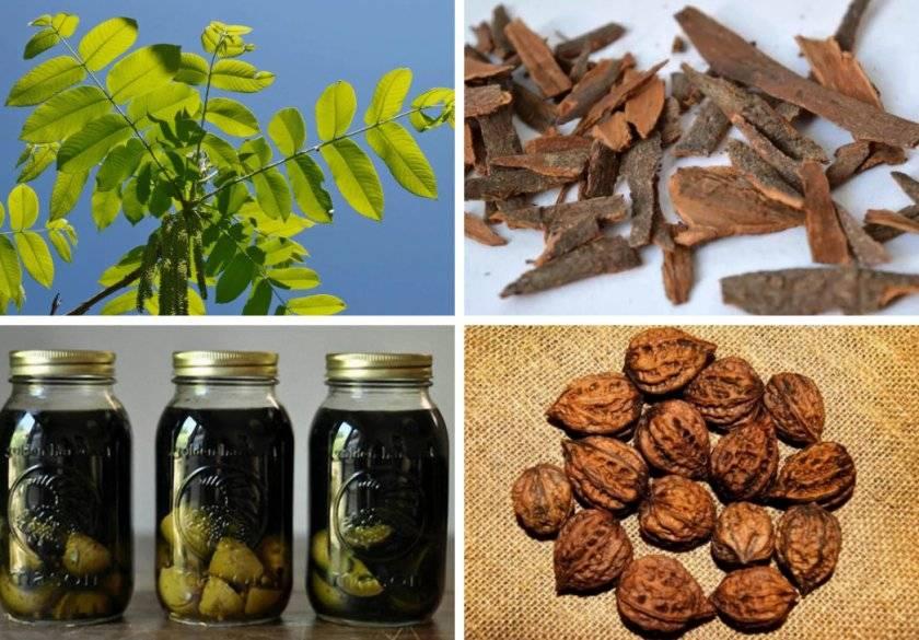 Грецкие орехи при диабете: свойства, польза | компетентно о здоровье на ilive