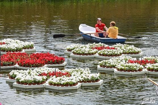 Выбираем растения для пруда, обзор растений, используемых для оформления искусственного водоёма