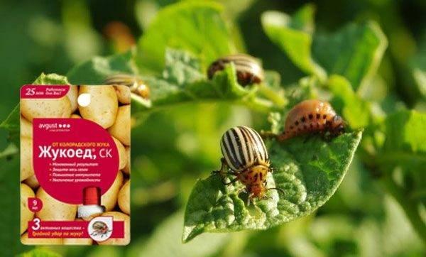 «батрайдер, ск», 3-х компонентный инсектицид (новинка)