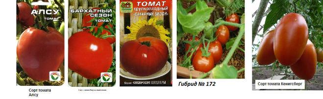 Низкорослые сорта томатов для открытого грунта с фото, описанием урожайные, сладкие, для подмосковья, для сибири, для урала