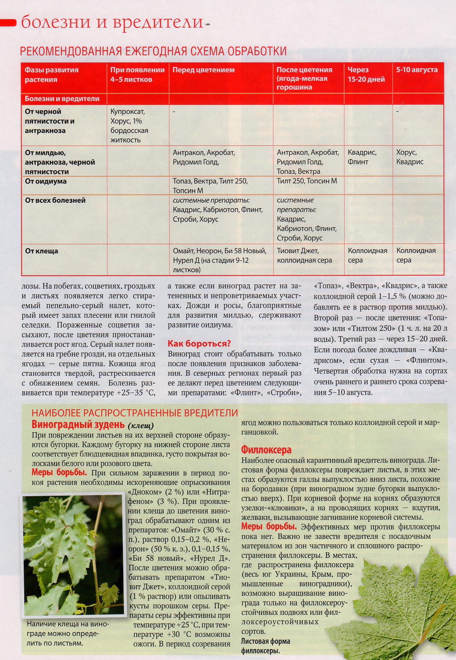 Сера для винограда: методы применения обработки коллоидной серой