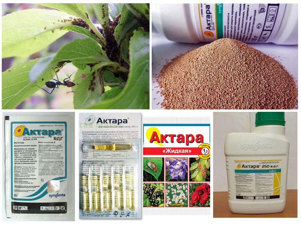 Применение инсектицида «актара» для огурцов в теплице