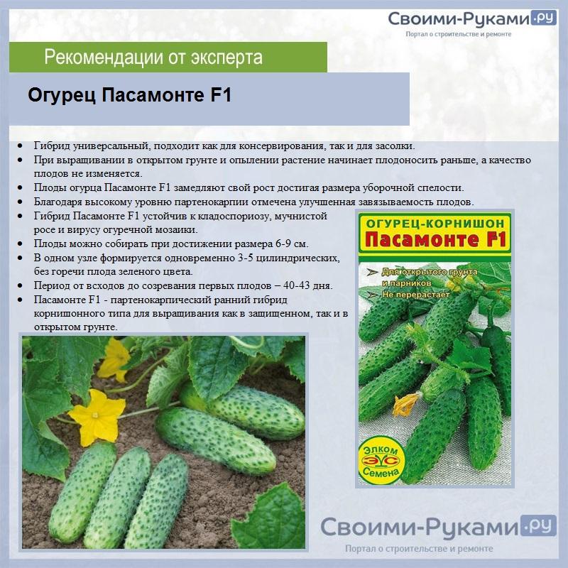 Огурец атос f1: описание и характеристики сорта, отзывы и фотографии, урожайность и устойчивость к болезням
