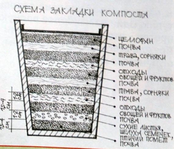 Перегной: характеристики, выбор и приготовление, применение в огороде