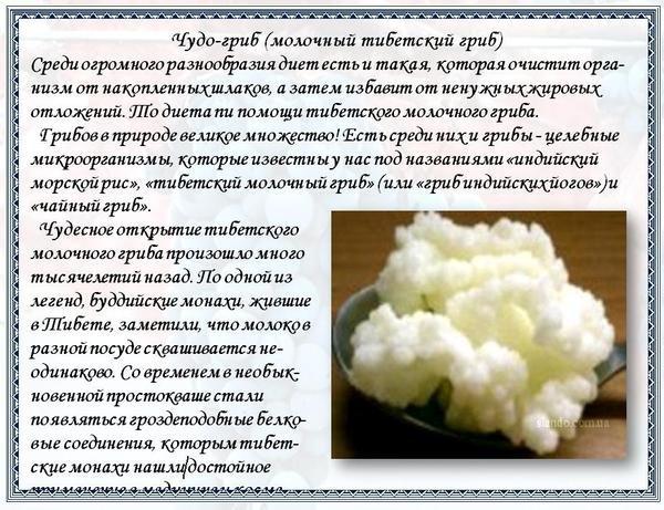 Молочный гриб: польза, рекомендации по уходу и употреблению
