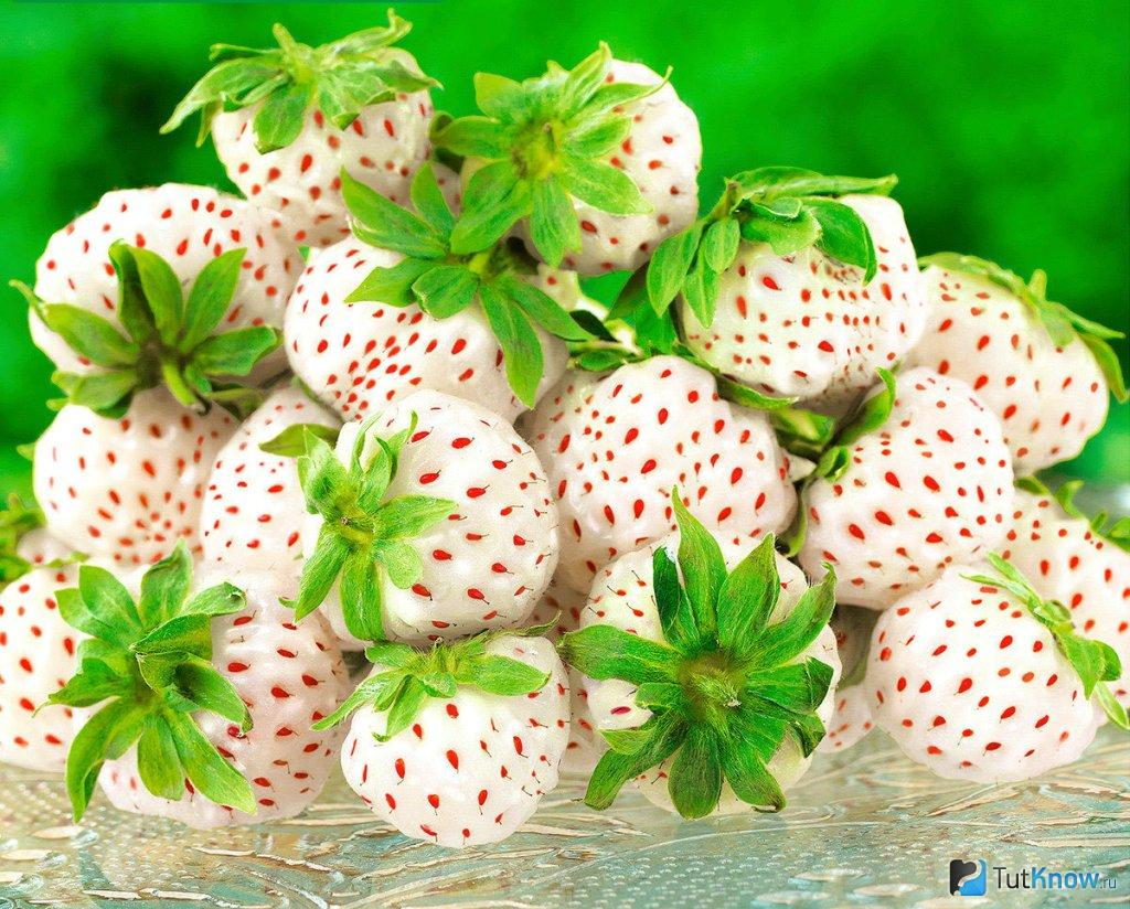 Белая (ананасная) клубника: описание сортов, особенности вкуса, как выращивать