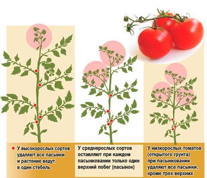 Как правильно пасынковать помидоры в теплице и открытом грунте пошагово
