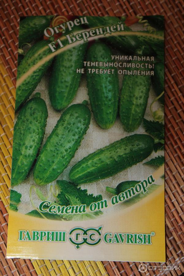 Сорт огурцов балконное чудо, описание, характеристика и отзывы, а также особенности выращивания