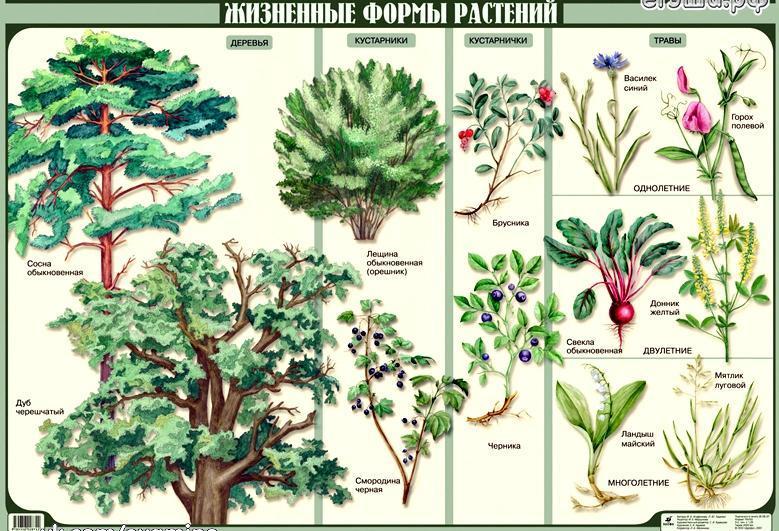 Белые кустарники, цветущие весной, в мае, декоративные кустарники