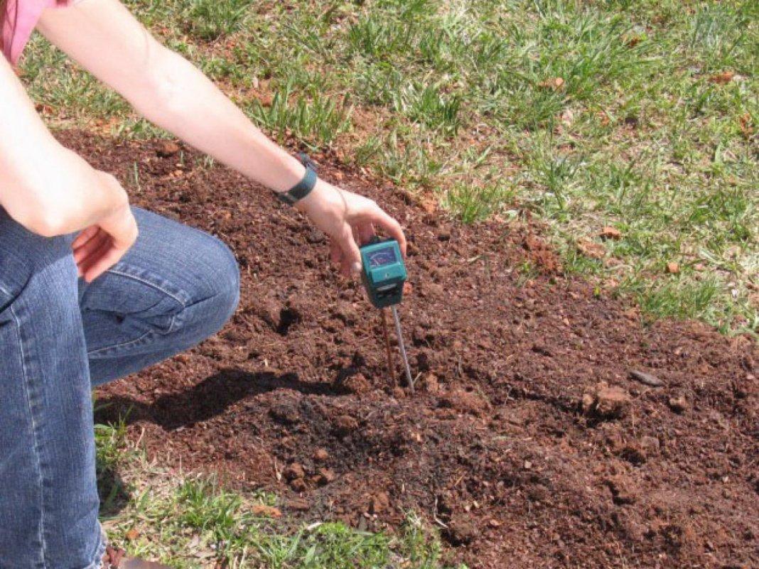 Как подкислить почву для голубики