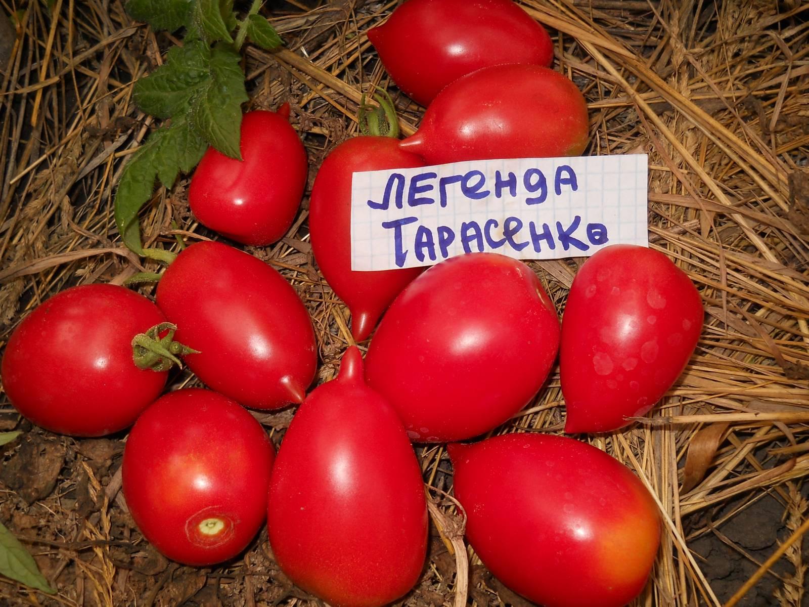 Томат юбилейный тарасенко: отзывы, фото, урожайность, описание и характеристика   tomatland.ru