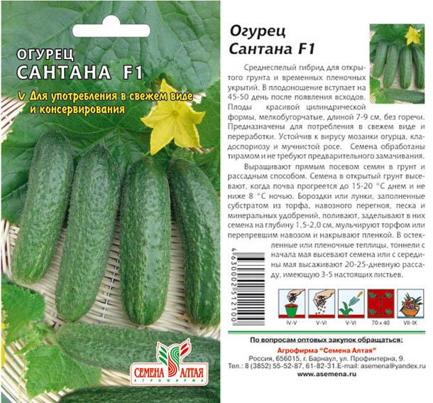 Огурец «эколь f1»: характеристика и агротехника выращивания