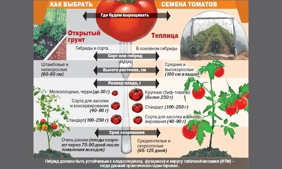 Как выращивать томаты в Сибири и правильно выбрать сорт, посадка и уход