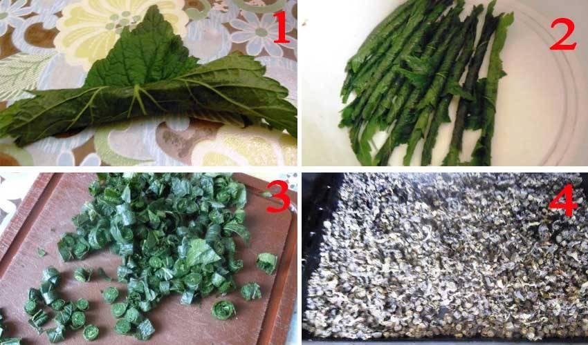Когда собирать листья смородины для чая?