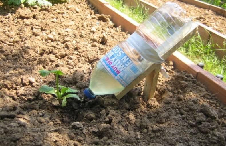 Полив огурцов: как правильно поливать огурцы в теплице и открытом грунте