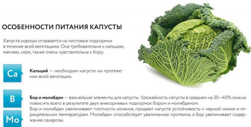 Удобрения для белокочанной капусты - правила применения