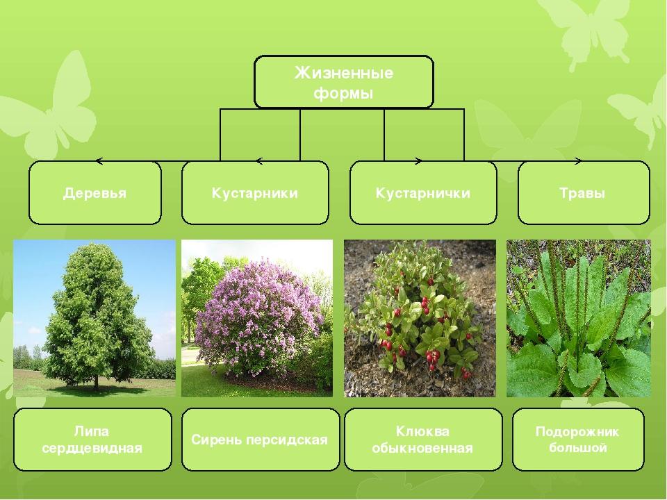Наиболее известные растения и кустарники с белыми цветами