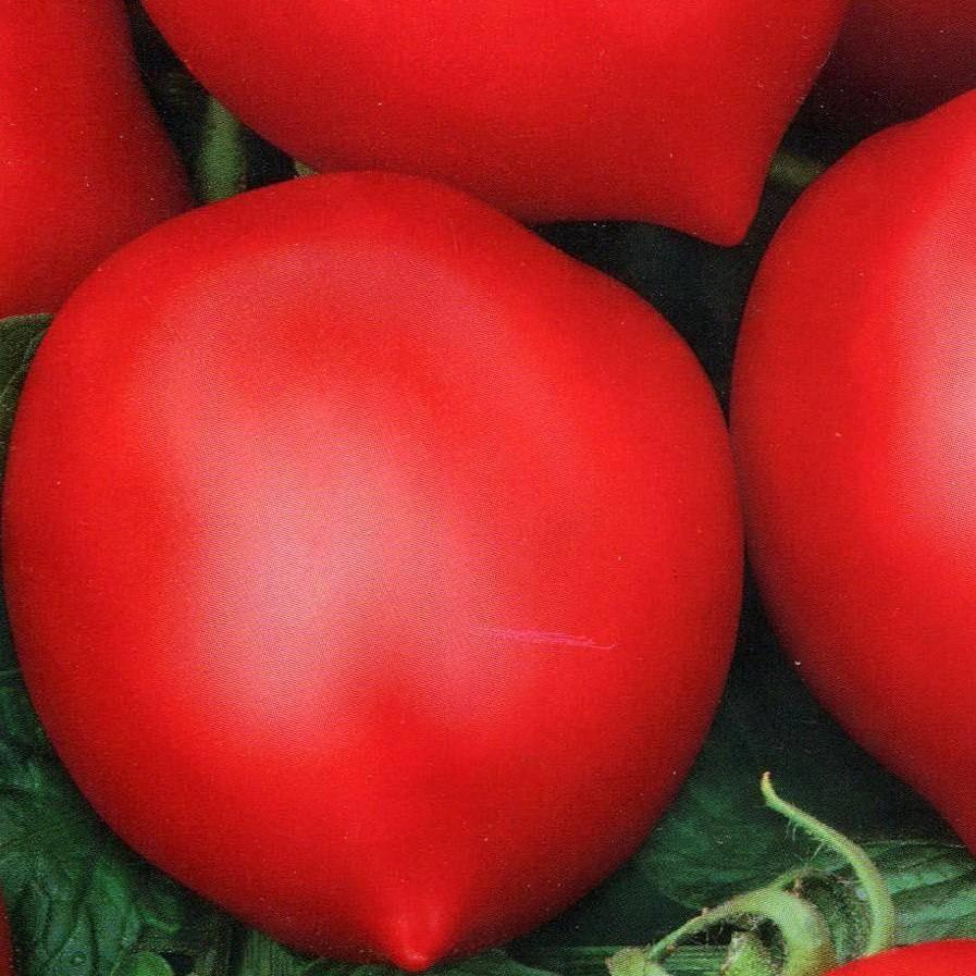 Лучшие сорта томатов для открытого грунта: описание наиболее популярных