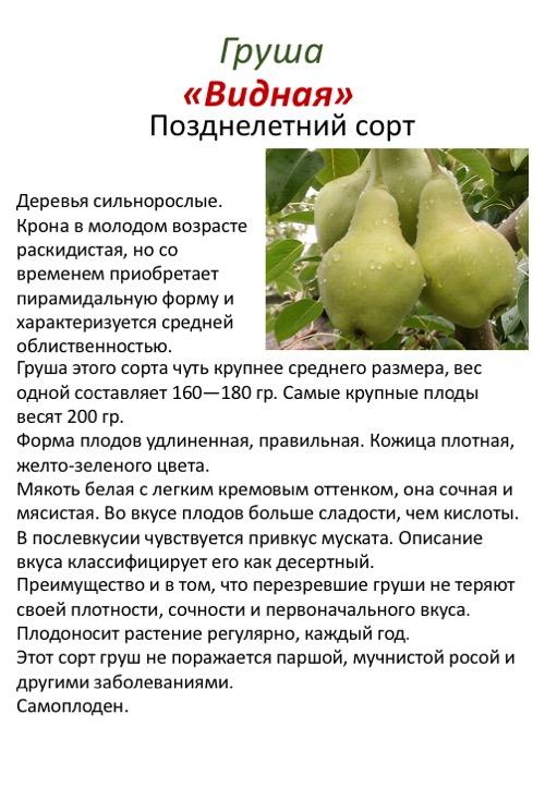 Лучшие сорта груш для сада