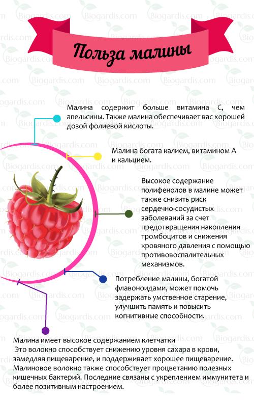 Малина - описание растения и ягоды, полезные и вредные свойства, состав и калорийность плодов